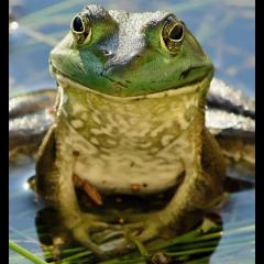 fredthefrog